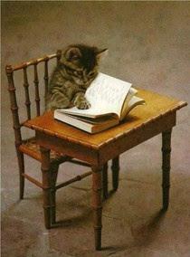 Kitten Doing Homework at His Tiny Desk