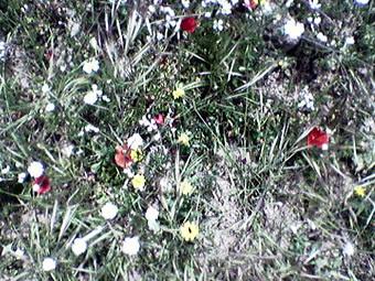 flores057