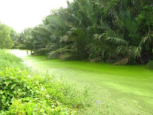Green river at Kuala Selangor