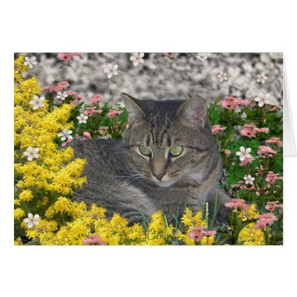 Mimosa the Tiger Cat in Mimosa Flowers Greeting Cards
