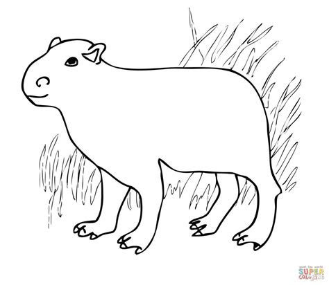 Capybara from South America coloring page   Free Printable Coloring Pages