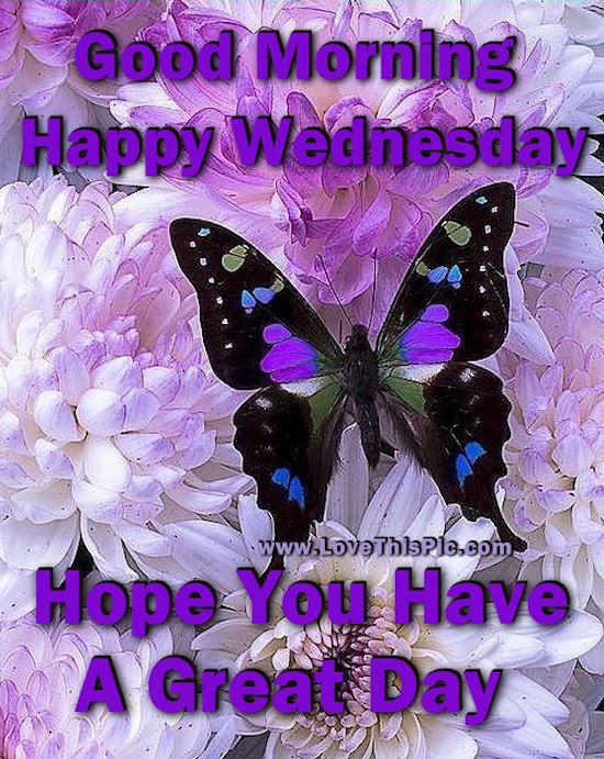 Good Morning Happy Wednesday Hope You Have A Great Day Pictures