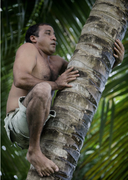"""In this photo taken Wednesday Aug. 24, 2011, Yoandri Hernandez Garrido, 37, known as """"Twenty-Four,"""" climbs a palm tree in Baracoa, Guantanamo province, Cuba. Hernandez is proud of his extra digits and"""