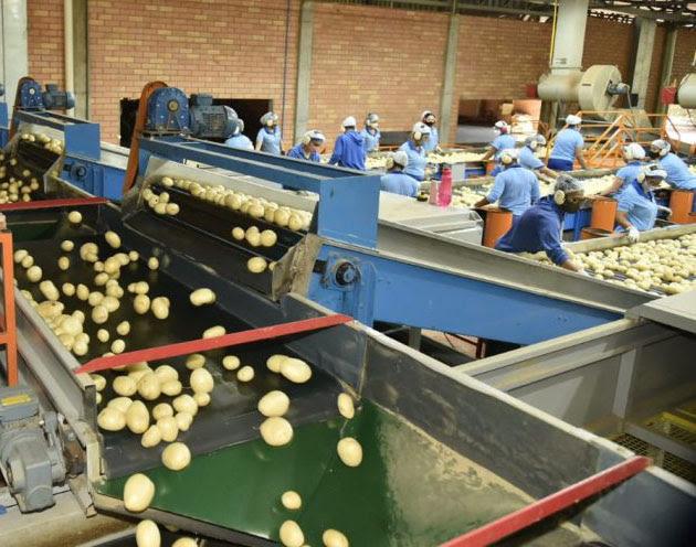 Ibicoara e Mucugê registram maiores valores de produção da batata-inglesa do país