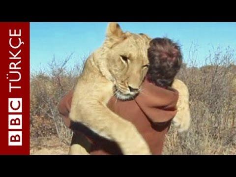 kafesten kurtardığı aslanı ile şimdi ava çıkıyor, geziyor doğal ortamına salmayı da düşünmüyor.