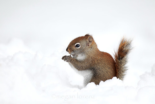 Aww Nuts! by Megan Lorenz