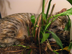 Maggie sleeping in the (not dead) plant