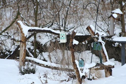 Backyard Scene in Winter
