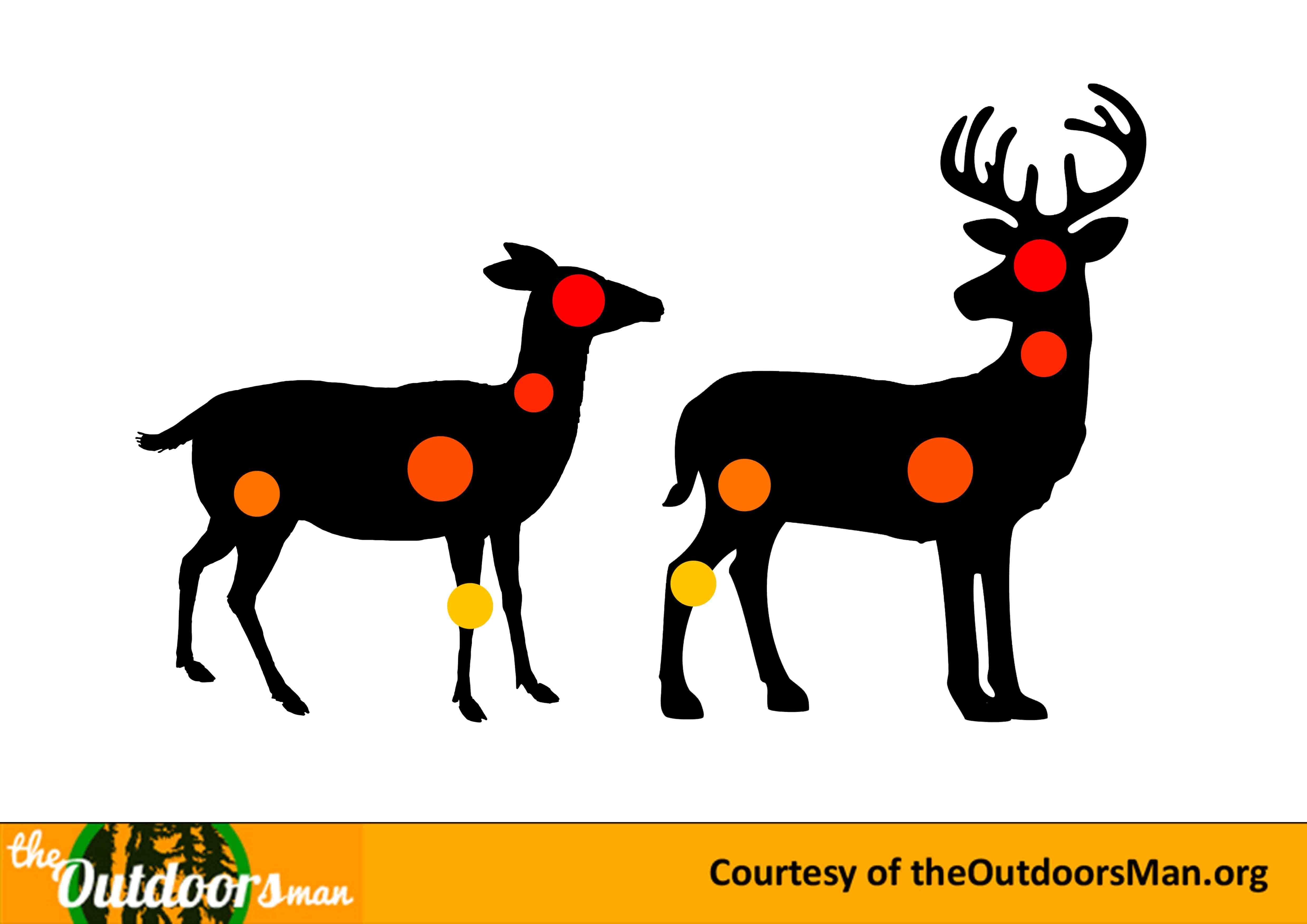 1000+ images about Cool Hunting Resources on Pinterest | Deer ...