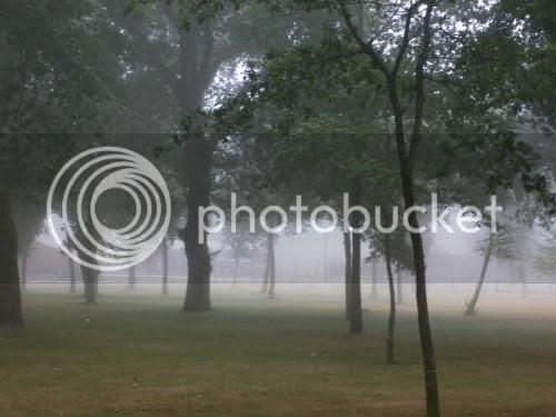 devesa con niebla