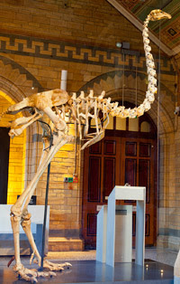Ancient specimens brought to life: Moa