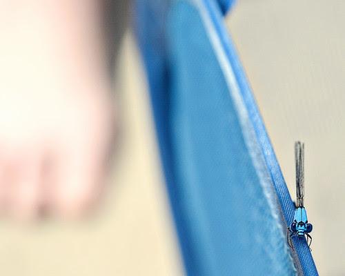 blue dragonfly on basket