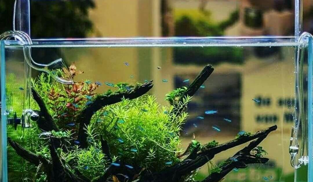 Setting Aquascape - HOME DESIGN
