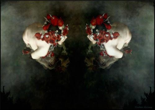 Rose Reflection  by harborgalaxy