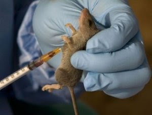 Lassa Fever Outbreak In Benue State, 5 people dead
