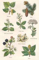 plantes medicinales et alim 1