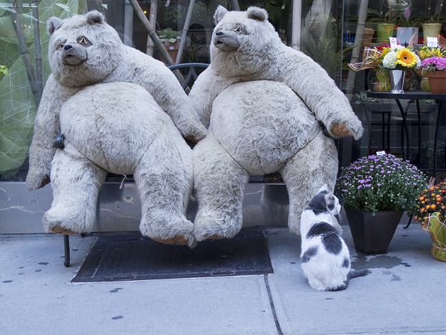Cat and friends, Midtown