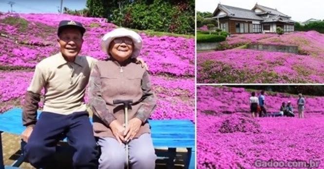 Este homem plantou milhares de flores para proporcionar a sua esposa cega um perfume muito especial