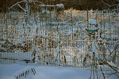 snowy gardens