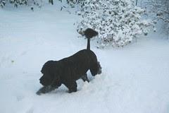 wading through the snow