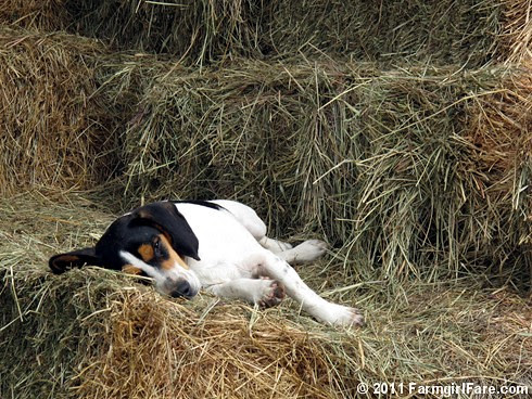 Bert in weekend recovery mode 1 - FarmgirlFare.com