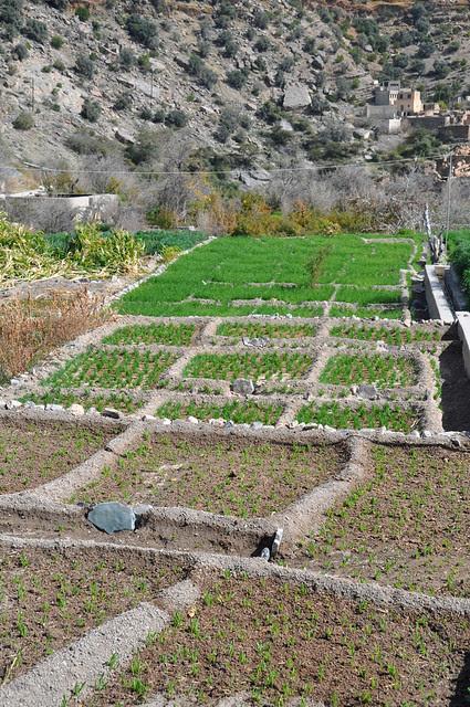 Djebel Akhdar (14)