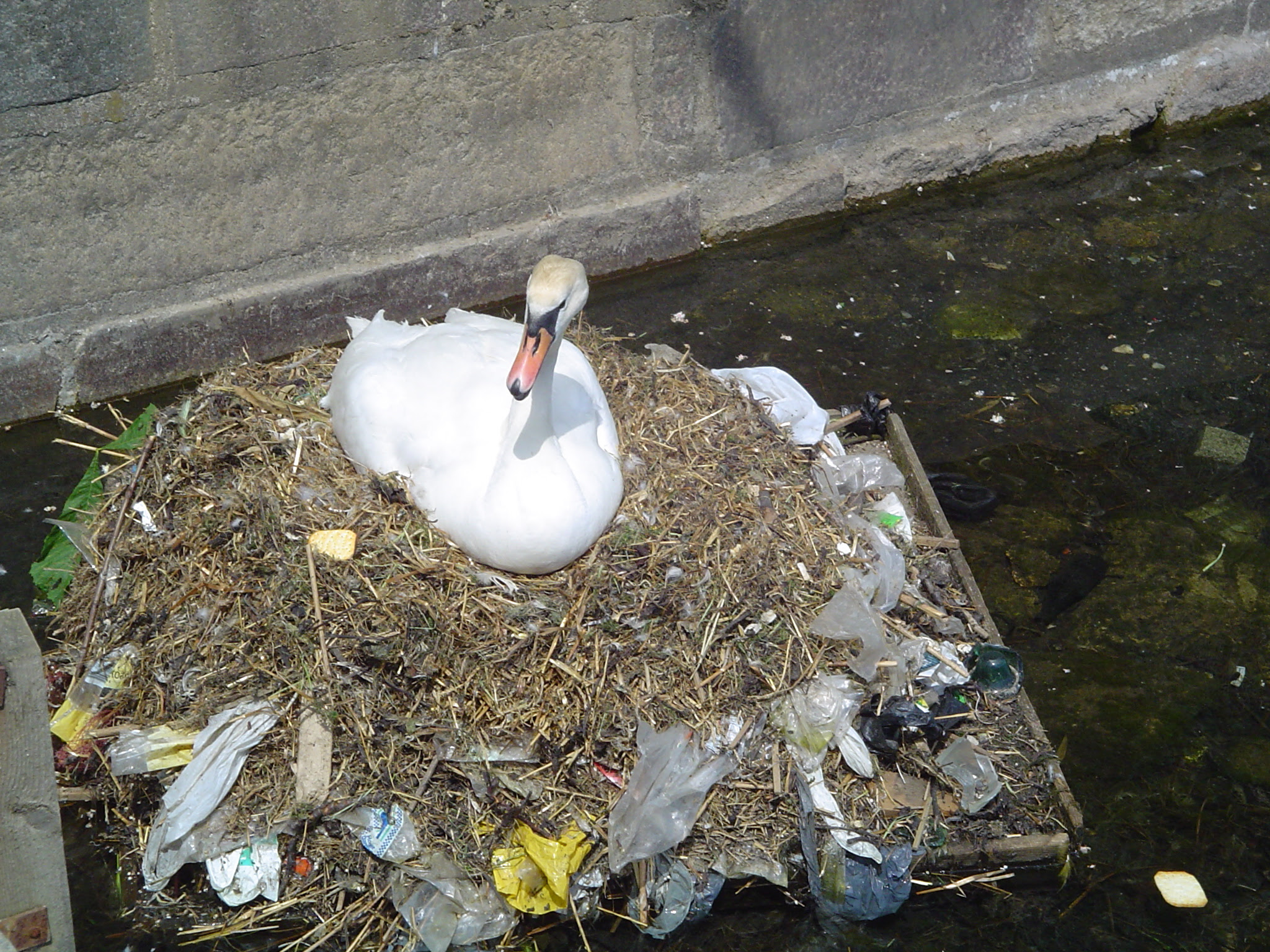 http://upload.wikimedia.org/wikipedia/commons/4/47/Pollution_swan.jpg