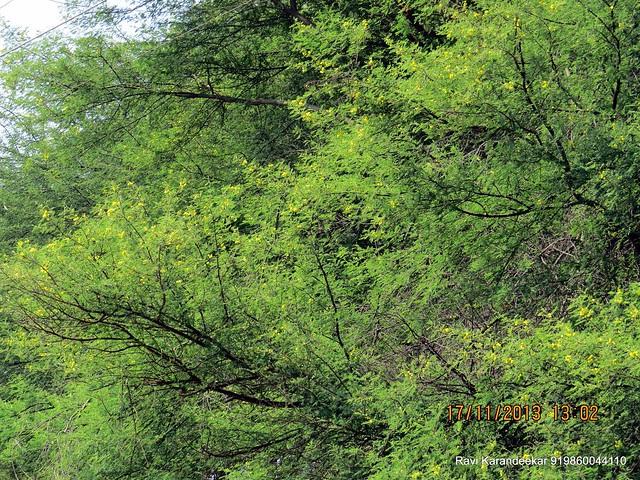 "Blossom of Babul - Visit Amit Rujuta Ventures' ""Gloria"" 1 BHK 1.5 BHK 2 BHK Flats at Nande near Hinjewadi on Pirangut Nande  Road Taluka Mulshi District Pune 412115"