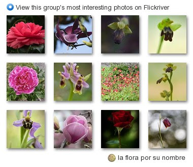 la flora por su nombre - View this group's most interesting photos on Flickriver