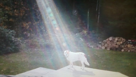 abc hero wardog ll 111122 wblog Not Photoshopped: Beam of Light Shines on Fallen Soldiers Miracle Dog