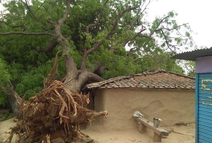 आंधी में कच्चे मकान पर गिरा पेड़