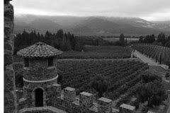 Castello di Amorosa - Vineyard