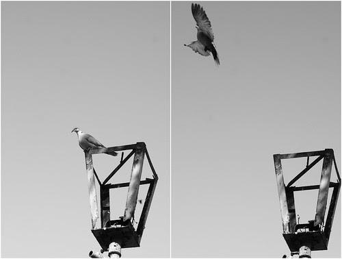 el vuelo by escael
