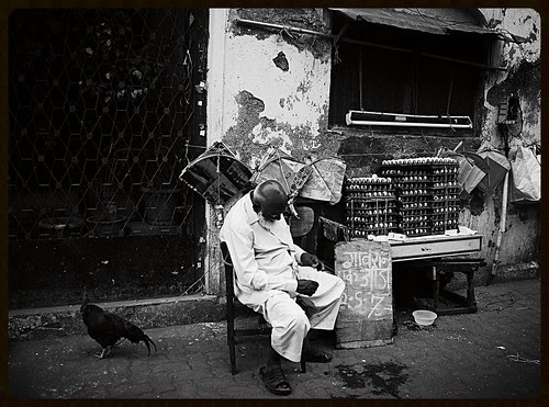 Both Bird And Man Need 40 Winks by firoze shakir photographerno1