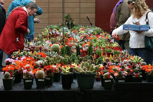 cactus and succlent sale