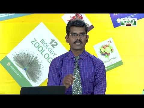 முப்பரிமாணம் Std 11 TM Chemistry வேதிவினை வேகவியல் பகுதி 3 Kalvi TV