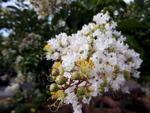 hotweatherflowers3
