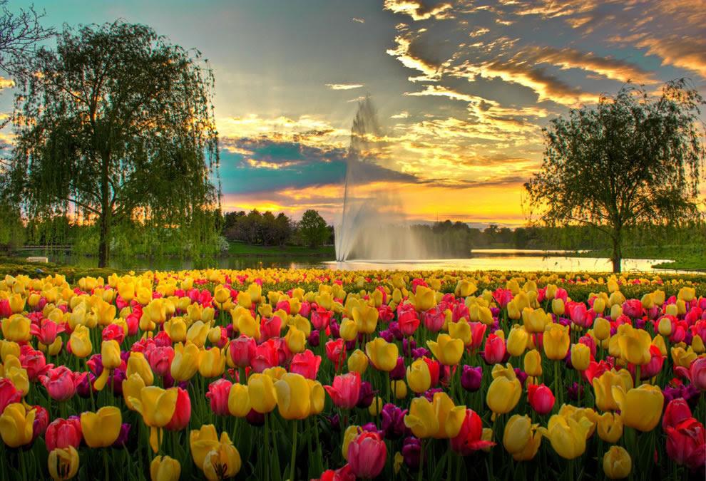 Ένα πολύχρωμο Evening at Chicago Botanic Garden, τουλίπες και το συντριβάνι