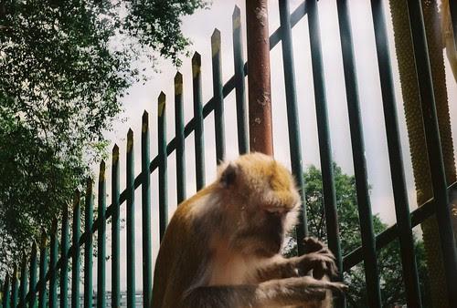 busy-monkey