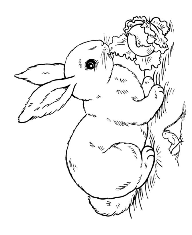 Easy Easter Bunny Coloring Pages at GetColorings.com ...
