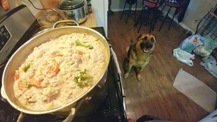 Il sait que je fais sa nourriture (riz, farine d'avoine, dinde hachée et légumes congelés 15 $ pour 15 lb)