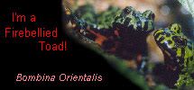 I'm a Firebellied Toad!
