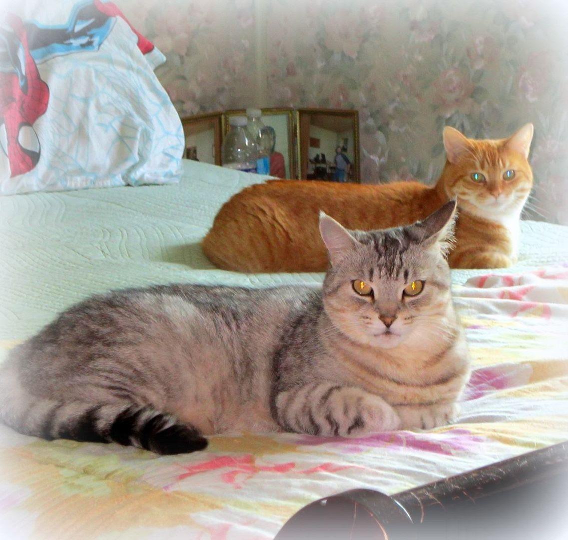 photo twocats_zps18d2b150.jpg