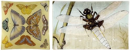 john derian butterfly dragonfly