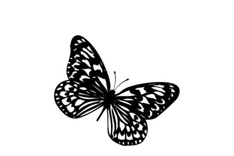 Butterfly (drawings)   Documents and Designs