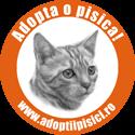 Pisici - Anunturi adoptii pisici
