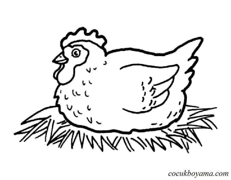 Tavuk 58 ücretsiz Boyama Resimleri