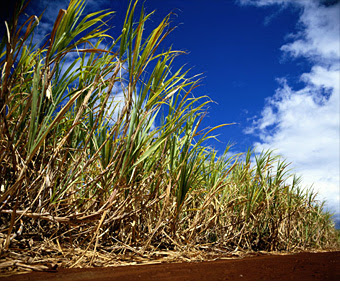 The Pros And Cons Of Biofuels Sugar Cane Ethanol 3 Fortune