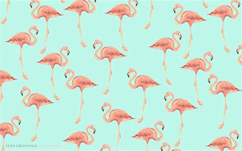 flamingos wallpapers wallpaper cave