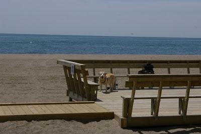 Beach Viewing Platform